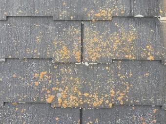 屋根コケ汚れ